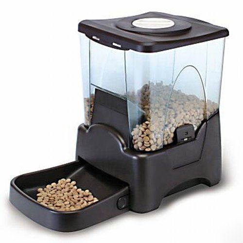 Best Automatic Cat Feeder For Multiple Cats Wet Amp Dry