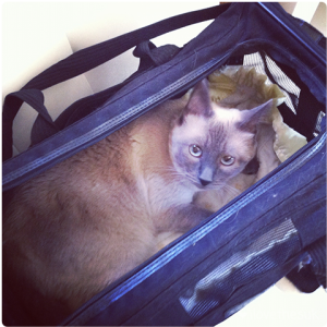 siamese cat carrier