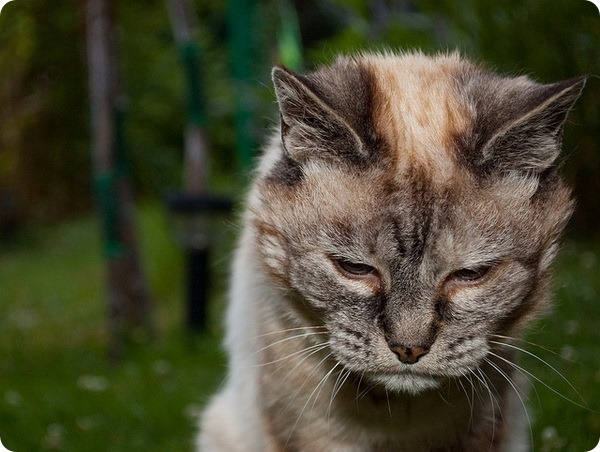 longest living cat guinness book of records