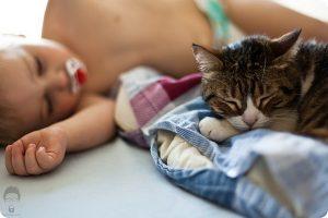 indoor cats life expectancy