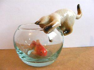 siames cat fish