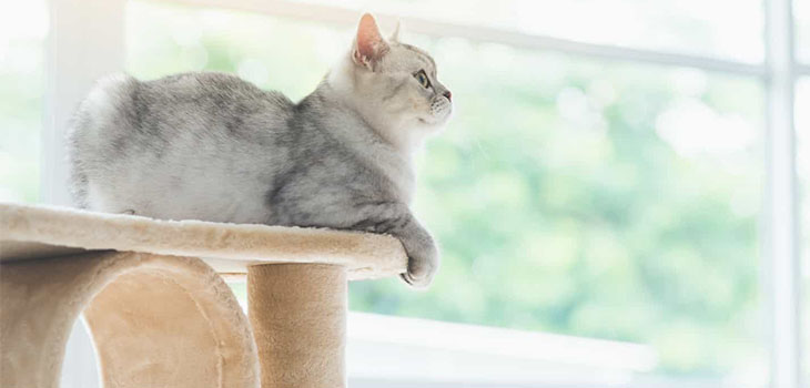 Armarkat B5701 Cat Tree Review: Best Cat Climbing Tree for Large Cats