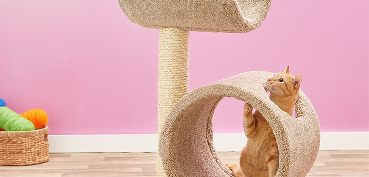 Molly and Friends Sisal Scratching Post Review