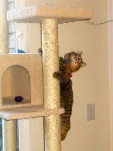armarkata b5701 cat climbing tree
