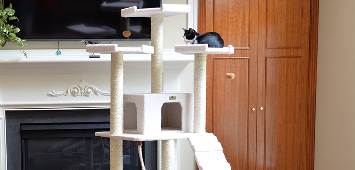 Armarkat B6802 Cat Tree Review