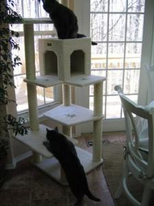 armarkat b6802 cat tree