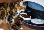 best automatic cat feeder for multiple cats