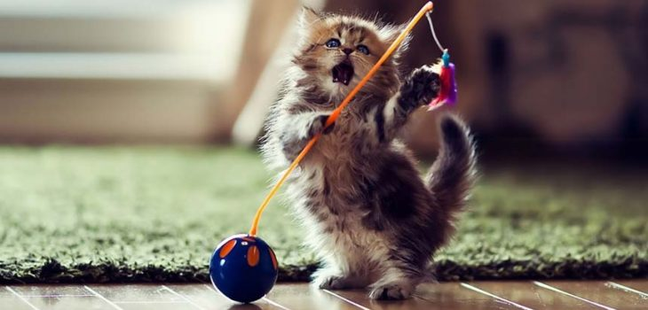 Best Cat Toys for Cats that Don't Like Toys