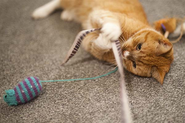 Here Are the Best Cat Toys for Cats that Don't Like Toys 2
